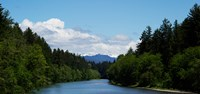 River flowing through a forest, Queets Rainforest, Olympic National Park, Washington State, USA Fine-Art Print