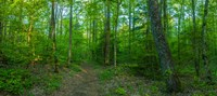 Forest, Great Smoky Mountains National Park, Blount County, Tennessee, USA Fine-Art Print