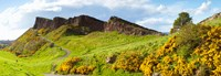 Gorse bushes growing on Arthur's Seat, Edinburgh, Scotland Fine-Art Print