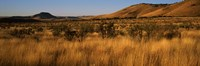 Dry grass on a landscape, Texas, USA Fine-Art Print