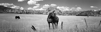 Horses Grazing at Kolob Reservoir, Utah (black & white) Fine-Art Print