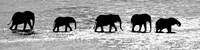 Herd of African Elephants Crossing the Uaso Nyiro River, Kenya (black & white) Fine-Art Print