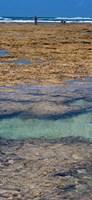 Indian Ocean, Fringe Reef, Mombasa Marine National Park and Reserve, Kenya Fine-Art Print