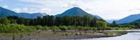 Quinault Rainforest, Olympic National Park, Olympic Peninsula, Washington State Fine-Art Print