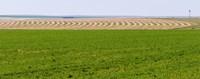 Harvested alfalfa field patterns, Oklahoma, USA Fine-Art Print