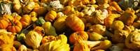 Pumpkins and gourds in a farm, Half Moon Bay, California, USA Fine-Art Print