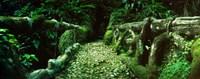 Wooden bridge in the subtropical forest, Parque Lage, Jardim Botanico, Corcovado, Rio de Janeiro, Brazil Fine-Art Print