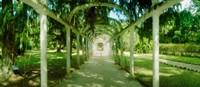 Pathway in a botanical garden, Jardim Botanico, Zona Sul, Rio de Janeiro, Brazil Fine-Art Print