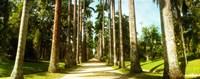Trees both sides of a garden path, Jardim Botanico, Zona Sul, Rio de Janeiro, Brazil Fine-Art Print