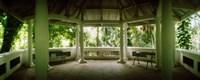 Canopy in the botanical garden, Jardim Botanico, Zona Sul, Rio de Janeiro, Brazil Fine-Art Print