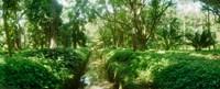 Trees in a botanical garden, Jardim Botanico, Zona Sul, Rio de Janeiro, Brazil Fine-Art Print