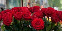Close-up of red roses in a bouquet during Sant Jordi Festival, Barcelona, Catalonia, Spain Fine-Art Print
