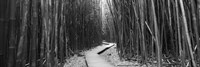 Bamboo forest in black and white, Oheo Gulch, Seven Sacred Pools, Hana, Maui, Hawaii, USA Fine-Art Print