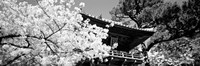 Golden Gate Park, Japanese Tea Garden (black & white) Fine-Art Print