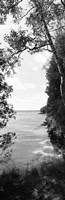 Trees at the lakeside in black and white, Lake Michigan, Wisconsin Fine-Art Print
