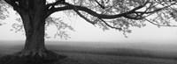 Tree in a farm, Knox Farm State Park, East Aurora, New York State, USA Fine-Art Print