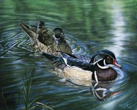 Wood Ducks Fine-Art Print