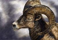 Desert Bighorn Sheep Fine-Art Print