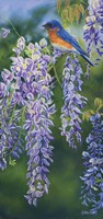 Bluebird In Wisteria Fine-Art Print