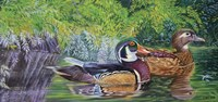 Bayou Wood Ducks Fine-Art Print