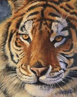 Siberian Tiger - up close Fine-Art Print