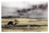 Limantour Marsh Fine-Art Print