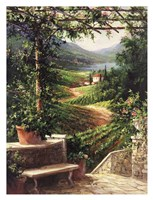 Chianti Vineyard Fine-Art Print