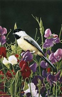 Sweet Peas And Chickadee Fine-Art Print