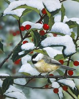 Chickadees And Holly Branch Fine-Art Print
