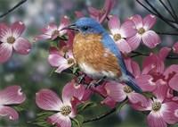 Bluebird/Pink Dogwood Fine-Art Print