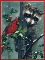 Raccoon - winter Fine-Art Print