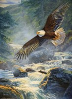 American Majesty Fine-Art Print