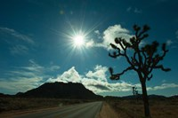 Joshua tree at the roadside, Joshua Tree National Park, California, USA Fine-Art Print