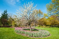 Sherwood Gardens, Baltimore, Maryland Fine-Art Print