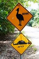 Warning sign at the roadside, Cape Tribulation, Queensland, Australia Fine-Art Print