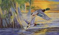 Bayou Sunset Fine-Art Print