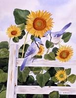 Bluejays And Sunflowers Fine-Art Print