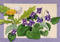 Dandelion And Violets Fine-Art Print