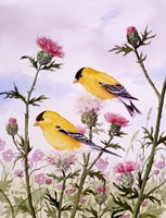 Goldfinch and Thistle Fine-Art Print