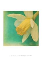 White Flowers V Fine-Art Print