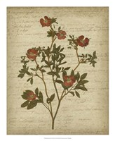 Romantic Pressed Flowers I Fine-Art Print