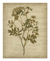 Romantic Pressed Flowers IV Fine-Art Print