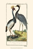 Buffon Cranes & Herons II Fine-Art Print