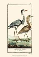 Buffon Cranes & Herons III Fine-Art Print