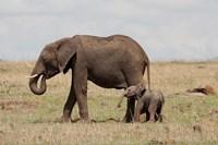 African Elephant With Baby, Maasai Mara Game Reserve, Kenya Fine-Art Print