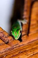 Gecko lizard, Fregate Island Resort, Seychelles Fine-Art Print