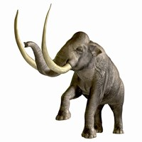 The Columbian Mammoth Fine-Art Print