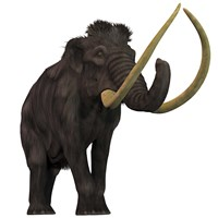 The Woolly Mammoth Fine-Art Print