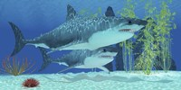 Two Megalodon sharks from the Cenozoic Era Fine-Art Print