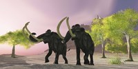 Two Woolly Mammoths searching for better vegetation to eat Fine-Art Print